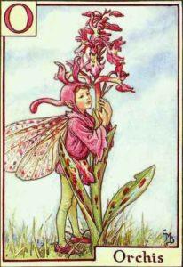 орхидея-баркер-