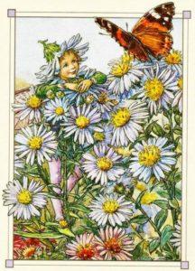 цветы-астра-баркер-