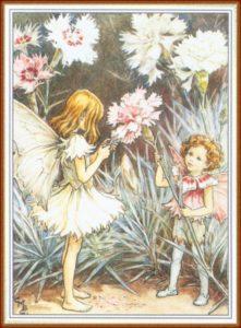 1-цветы- гвоздика--баркер