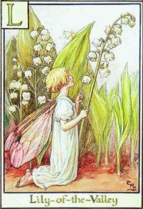 цветы-ландыш-баркер-