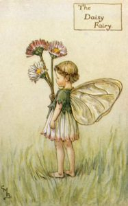 цветы-маргаритка-баркер