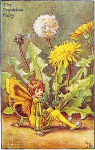 цветы-одуванчик-баркер