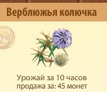 1-верблюжья колючка - Территория Фермеров