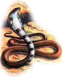 -змеиные праздники-