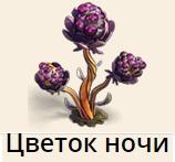 1-ночи цветок-фанта-Верность