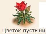 1-пустыни цветок-фанта-Клондайк