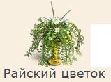 1-райский цветок-фанта-Клондайк