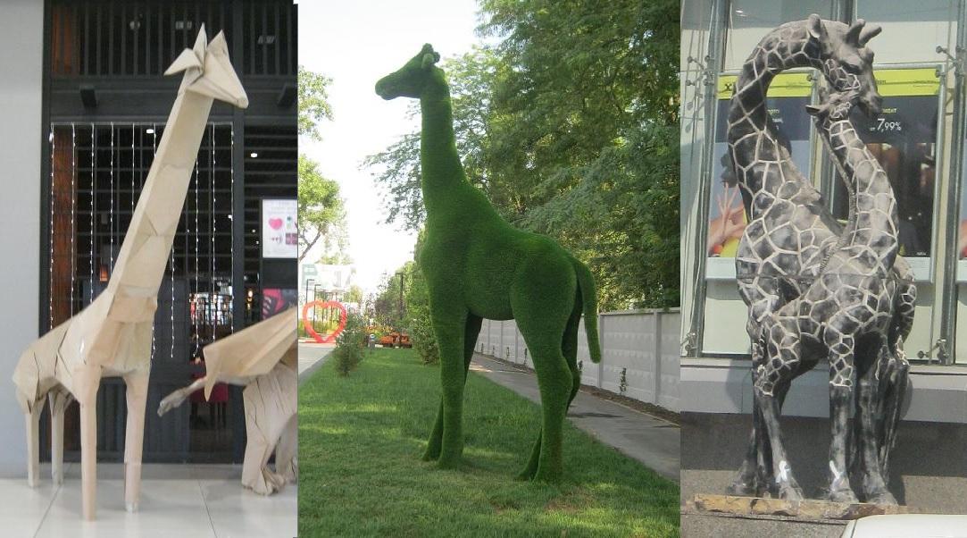 1-жирафы Краснодара