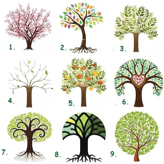 -травоведение-тест о деревце