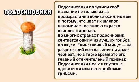 1-подосиновики-грибники и кланы